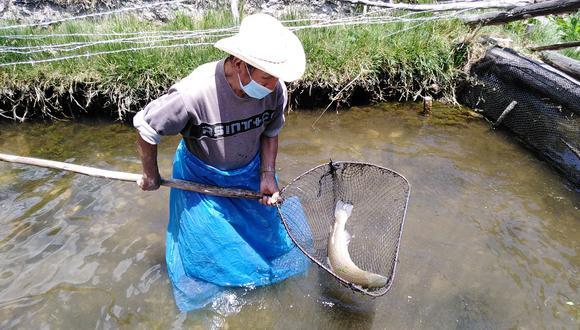 Huancavelica: adulto mayor es reconocido como emprendedor por la venta de truchas en Acoria (Foto: Midis).