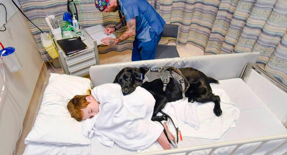 Mahe, el perro que nunca deja a su dueño autista, ni en la cama del hospital. (Louise Goossends)