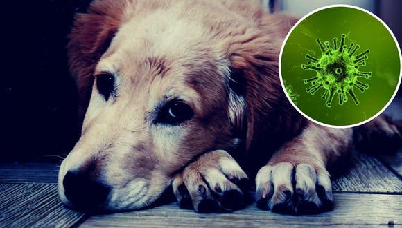 ¡Una buena noticia! Mascotas están a salvo del coronavirus y no lo pueden trasmitir según infectólogo