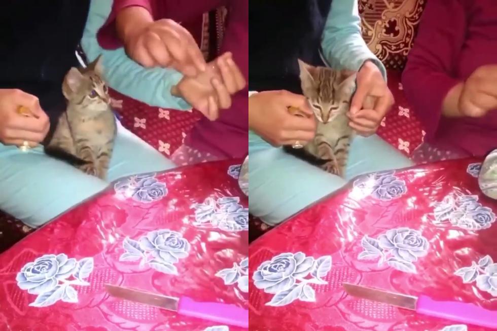 Un gato conquistó las redes sociales al convertirse en el ayudante perfecto de una pareja que envolvía un obsequio. (Fotos: Mishis Tóxicos en Facebook)