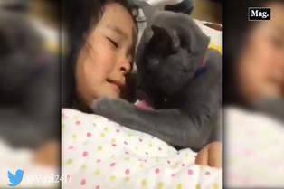 Cariñoso gatito consuela llanto de una menor