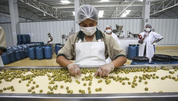 La producción nacional de aceitunas en el 2020 ascendió a 174,328 toneladas. (Foto: GEC)