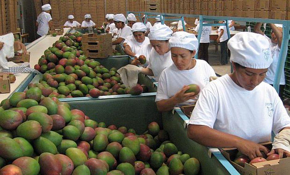 El crecimiento del empleo formal en el sector privado fue impulsado por el sector agropecuario y el sector servicios en el primer mes del 2019. (Foto: GEC)
