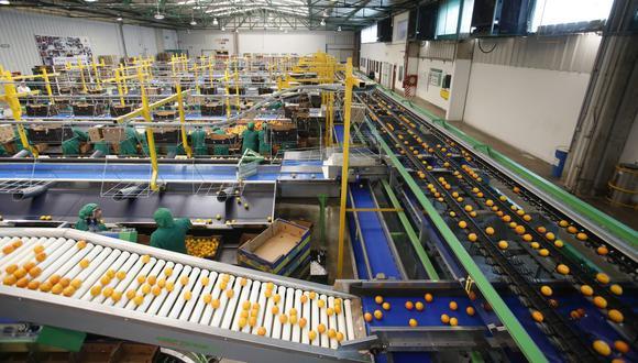 Entre las principales frutas exportadas, destacaron los envíos de palta, uva, arándanos, mangos y cítricos. (Foto: GEC)