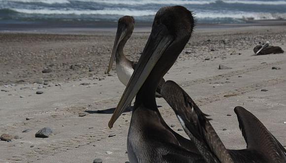 La Armap pretende replicar esta acción en diferentes playas del país.