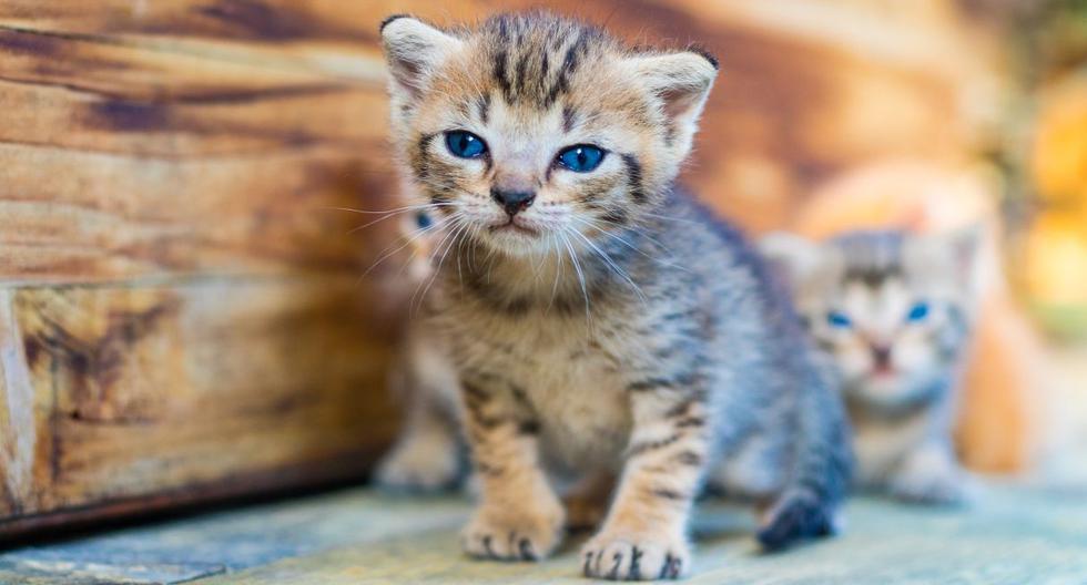 Los gatos recién nacidos habían quedado atrapados en un agujero y el valeroso bombero no dudó en rescatarlos. (Foto: Pixabay)