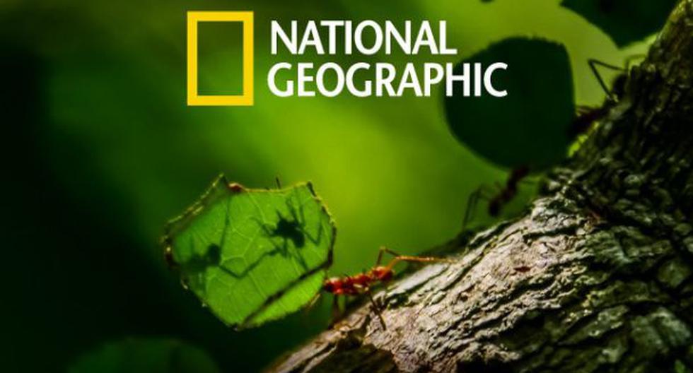 Día del Medio Ambiente: NatGeo presentará una programación especial para reflexionar sobre nuestro impacto. (NatGeo)