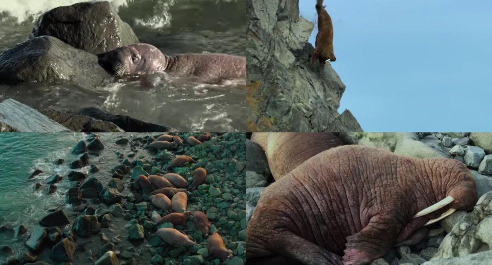 Este documental nos ayudará a reflexionar el impacto del ser humano en la naturaleza.(Captura de pantalla/ Netflix)
