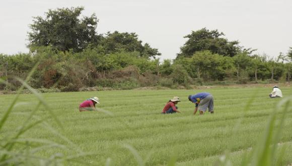 RIESGO. Podría perderse todo lo avanzado en la agroindustria, advierten en Comex Perú. (USI)