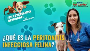 ¿Qué es la peritonitis infecciosa felina?