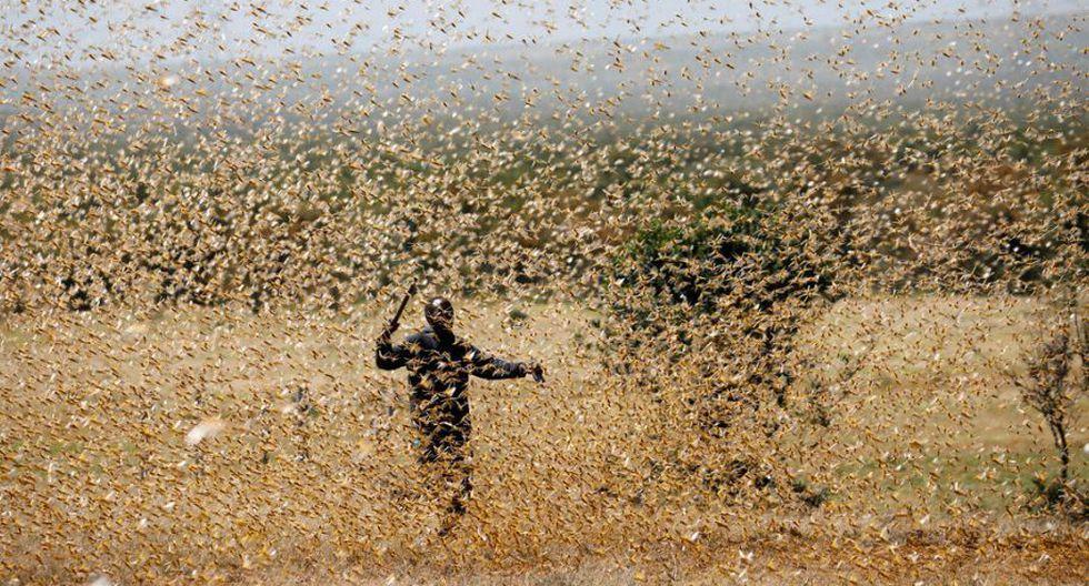 Hombre intenta escapar del emjambre de langostas en Kenia. (Reuters)