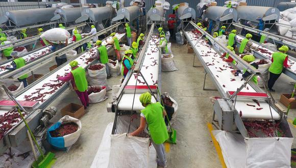 Los gremios de productores afirman que las empresas formales sí cumplen con la ley y los pagos correspondientes a sus trabajadores. (Foto: GEC)