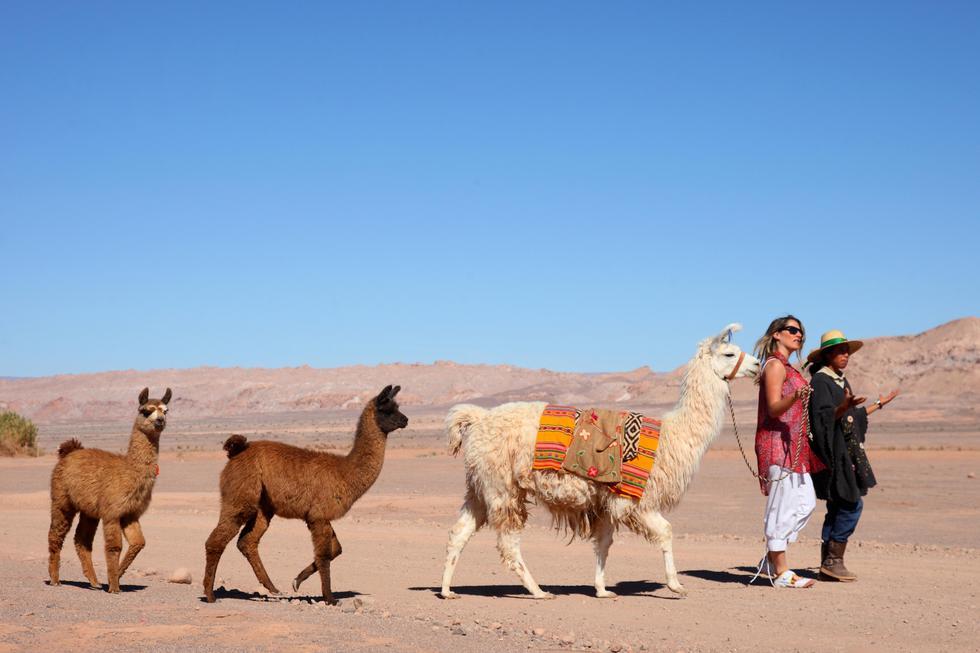 Las alturas del desierto de Atacama tienen mil y un atractivos para ti.(Foto: SERNATUR Chile)