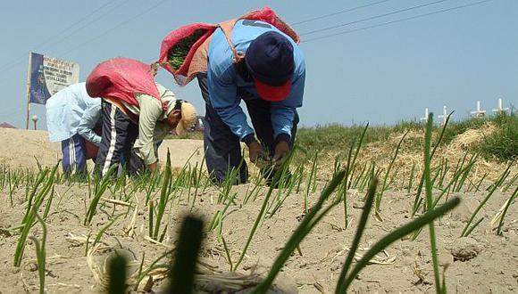 El 82% del total de agricultores posee menos de cinco hectáreas. (USI)