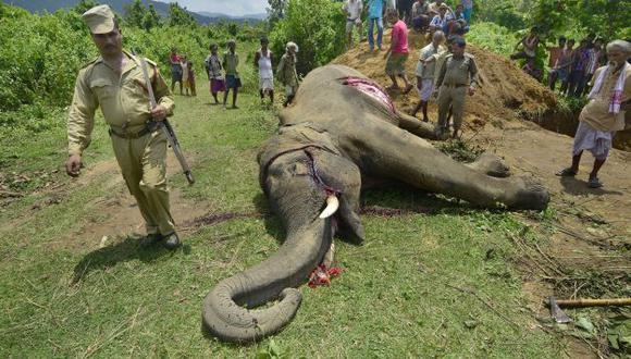 Cazadores furtivos matan 35, 000 elefantes al año por su marfil. (EFE/Referencial)