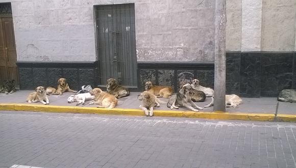 Se estima que en la capital hay dos millones de perros.