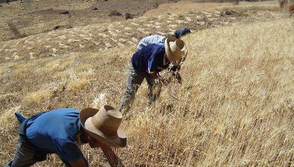El subsector agro potenció el crecimiento general. (Foto: Minagri)
