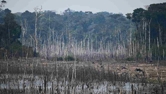 Las cifras oficiales muestran que 78,383 incendios forestales se han registrado en Brasil este año. En la foto, imagen de un área de bosque despejada en los alrededores de Porto Velho. (Foto: AFP)