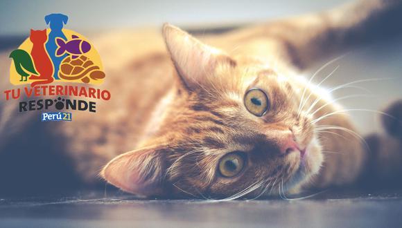 Tu veterinario responde: Todo lo que debes saber sobre la anemia en los gatos. (Pixabay)