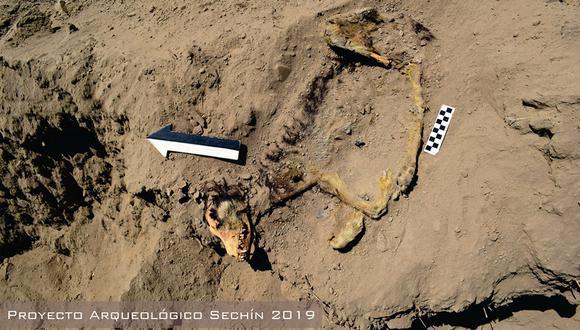 El perro pertenecería a los habitantes de la cultura Casma que reocuparon las ruinas de Sechín 1.000 años después de Cristo. (Foto: Fb/Proyecto Arqueológico Sechín)