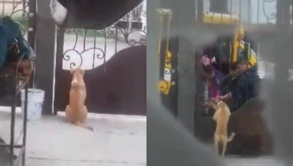 Un perro espera el regreso de los niños que estudiaban a lado de su casa para que lo acaricien como solían hacerlo cada mañana. | Crédito: @brandonmavil / TikTok.