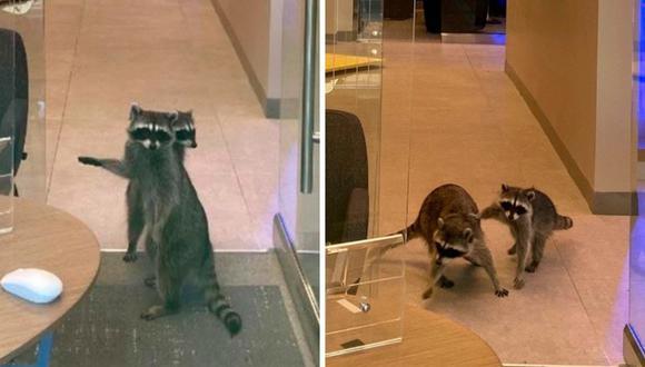 Los roedores habrían entrado por el sistema de ventilación del banco. (Foto: Peninsula Humane Society & SPCA)
