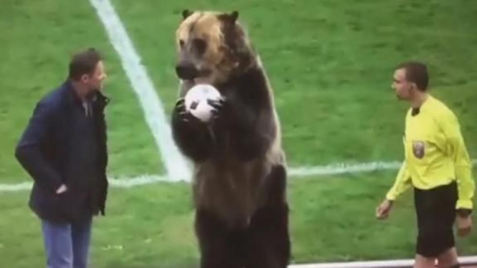 Oso en un campo de fútbol. (Facebook)