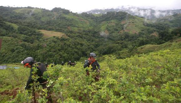 NUEVO PLAN. Producción de coca ilegal se espera reducir en 30% en cinco años. (Fidel Carrillo)