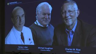 El Nobel de Medicina premia a tres descubridores del virus de la hepatitis C