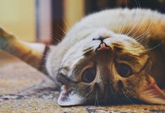 Una gata asombra a miles en las redes por ser capaz de entrar a cualquier habitación