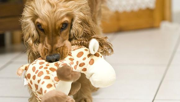 Tira sus juguetes para que él lo recoja. (Foto: Pixabay)