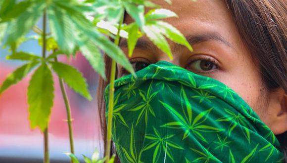 Las reformas permitirán poseer hasta ocho plantas por domicilio, autorizará alimentos y derivados con cannabis no psicoactivo, otorgará licencias para siembra, cultivo y cosecha, y garantiza el consumo privado de marihuana sin menores de edad presentes. (EFE/José Pazos)