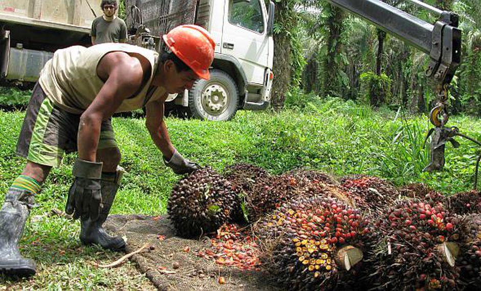 La palma aceitera se emplea para elaborar aceite vegetal. (Foto: El Comercio)