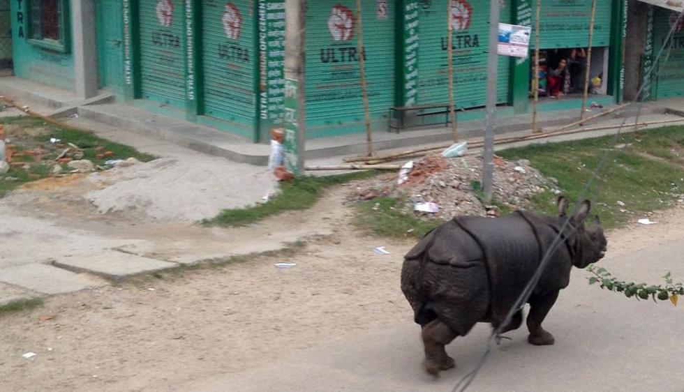 Un rinoceronte se escapó de la Reserva de Vida Silvestre de Parsa, en Nepal. (AFP)