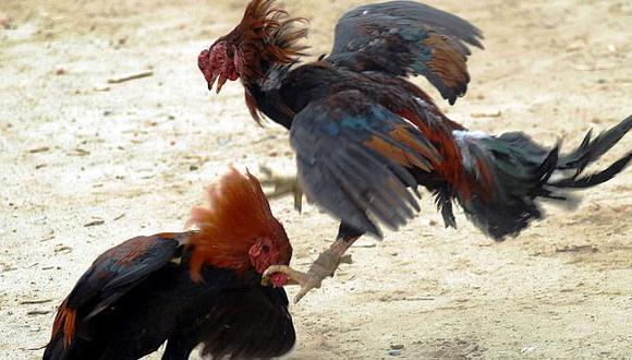 En Nueva York las peleas de gallos son multadas hasta con US$25,000. (Referencial/Internet)