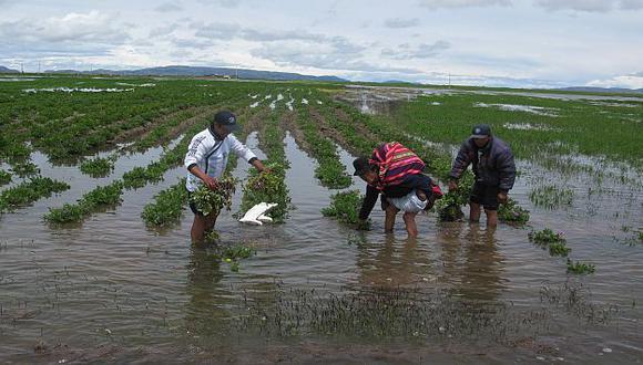 Perú tiene una diversidad importante de valles y proveedores. (USI)