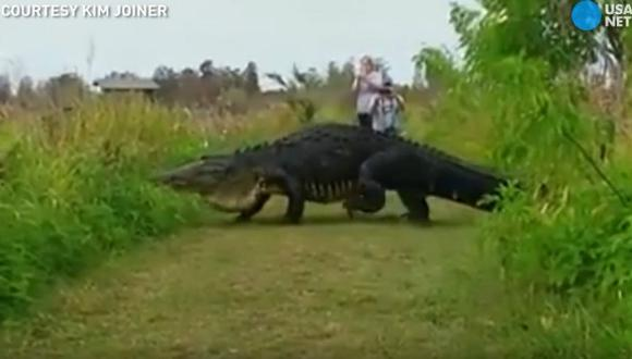 Este cocodrilo gigante es lo más cercano a un dinosaurio que verás hoy. (Captura de YouTube/Usa Today)