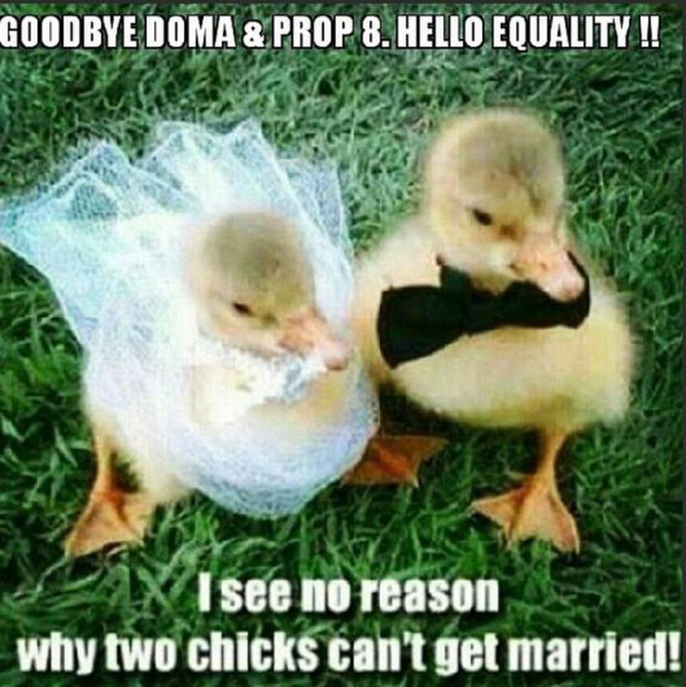 No veo alguna razón por la que dos 'polluelas' no puedan casarse. (@daddonarazzi)