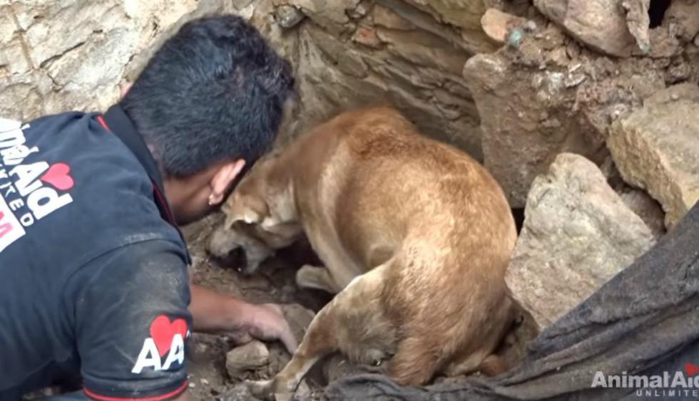 Se volvió viral en Facebook y otras redes sociales el emotivo rescate de unos cachorros que quedaron enterrados tras un derrumbe. (Foto: Captura)