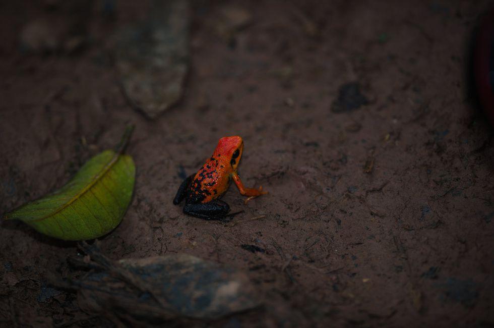 La naturaleza viva te espera en el Parque Nacional de Tingo María. (Foto: PromPerú)
