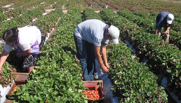 Agrobanco desembolsó S/ 157,18 millones de créditos para 15.172 pequeños productores agropecuarios y 886 asociaciones de agricultores en el primer trimestre. (Foto: Minam)