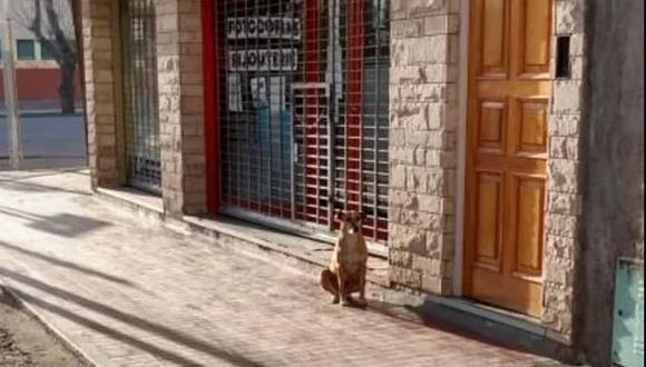 La historia de Bianca se pudo conocer gracias a una foto viral en Twitter. La perrita espera todos los días a que llegue su dueño que falleció hace varios días.  Foto: @NIrrutia/Twitter