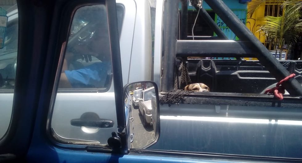 Maltrato animal: Conductor transporta a su perro en tolva bajo el ardiente sol