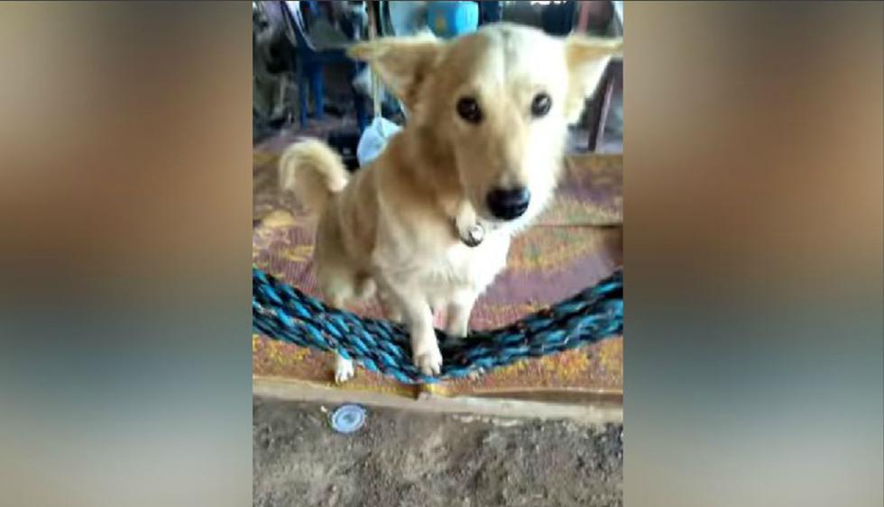 El can aparentemente estaba muy cansado y vio conveniente subirse a una hamaca. (YouTube: ViralHog)