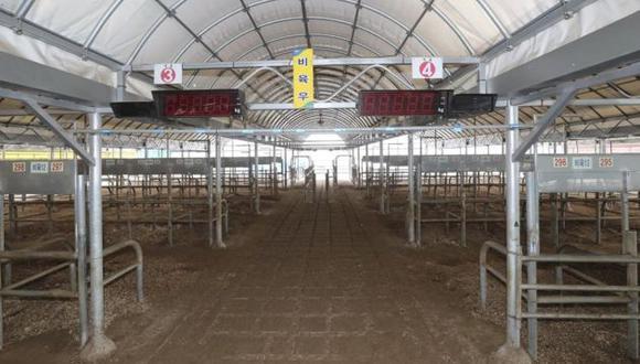 Más de 33 millones de aves han sido sacrificados por la gripe aviar en Corea del Sur (Efe).