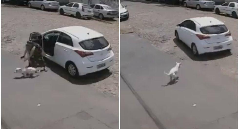 Una cámara de seguridad registró el preciso instante en que un perro discapacitado es abandonado; sin embargo, la historia tuvo final feliz. (Foto: Captura)