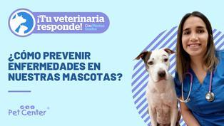 ¿Cómo prevenir las enfermedades en nuestras mascotas?