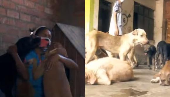 Albergues piden ayuda para mantener a sus animales rescatados durante la cuarentena