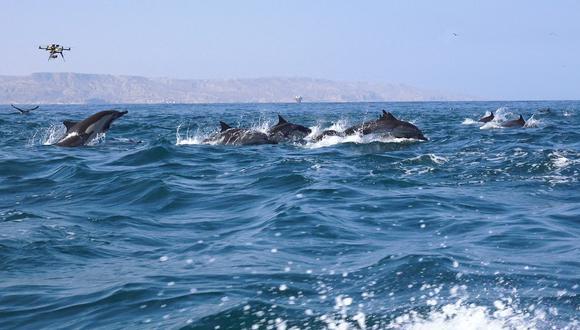 Las diversas tomas aéreas al mar y sus especies impresionan en 'Pacificum' (Difusión).