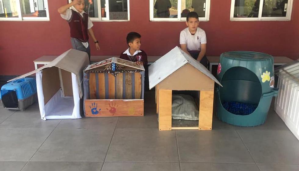 Ellos recolectaron cajas de cartón, láminas, rejas, trozos de madera y cestos para elaborar casas para los perritos. (Foto: captura Facebook)